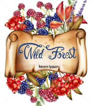 Wild forest fruits bouquet card vector watercolor. Isolated background. Provence flowers banner - Starpik Stock