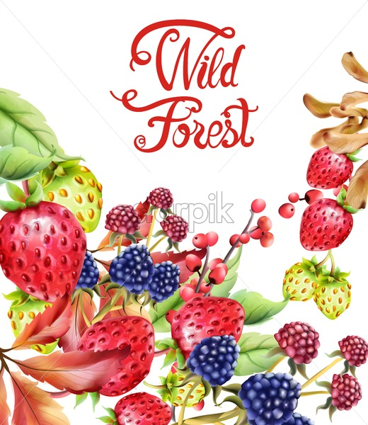 Wild forest fruits composition vector. Strawberries, autumn leaves and berries - Starpik Stock