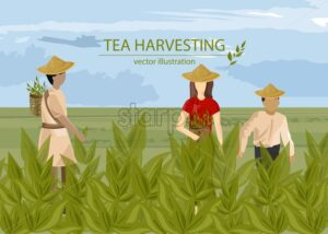 Asian people harvesting tea with basket. Wearing hats. Cloudy sky. Vector - Starpik Stock