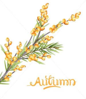 Autumn yellow berries branch with green leaves. Seasonal vector - Starpik Stock
