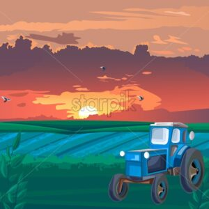 Blue Tractor in the field at sunset. Warm orange sky with clouds. Agricultural vector - Starpik Stock
