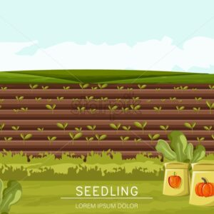 Field planted with seedling technique. Bag of pepper and pumpkin seeds on foreground. Place for text. Agricultural vector - Starpik Stock
