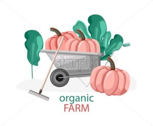 Organic farm composition with pumpkins in wheelbarrow, green bushes and rake. Healthy food gardening idea - Starpik Stock