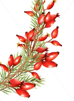 Red berries with fir tree leaves. Light reflecting on fruits. Vector - Starpik Stock