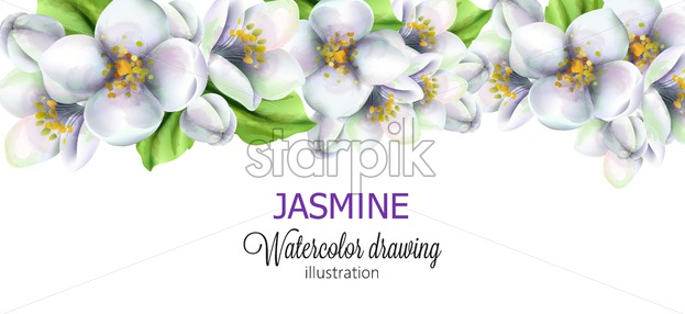 Jasmine watercolor drawing with flowers on top. Vector