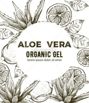 Aloe Vera organic gel with line art style drawings. Kiwi, lime slices. Place for text. Vector - Starpik Stock