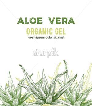 Aloe Vera organic gel with line art style drawings. Place for text. Vector - Starpik Stock