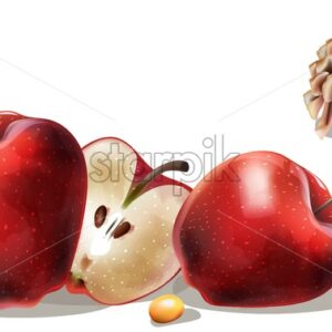 Apple slices, yellow berries and conifer cone. Late autumn or winter composition vector - Starpik Stock