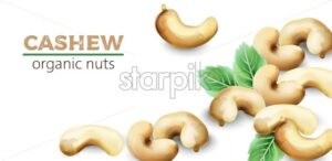 Cashew watercolor nuts with mint leaves. Vector - Starpik Stock