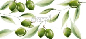 Green olives with leaves and light reflecting on structure. Wide background watercolor vector - Starpik Stock