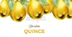 Late autumn quince with leaves in watercolor style. Vector - Starpik Stock