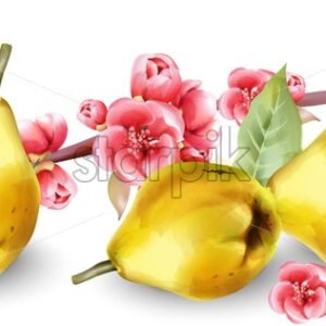 Late autumn quince with rose flowers on branch. Wide banner. Vector - Starpik Stock