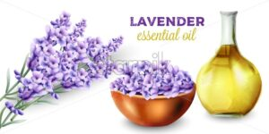 Lavender essential oil. Bunch of flowers. Watercolor vector - Starpik Stock