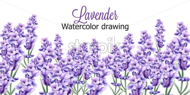 Lavender watercolor drawing with isolated background. Vector - Starpik Stock