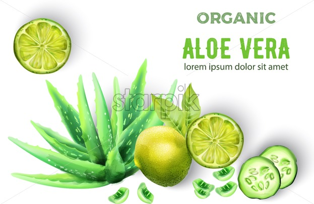 Organic Aloe Vera products. Lime and cucumber slices decorations. White background. Vector - Starpik Stock