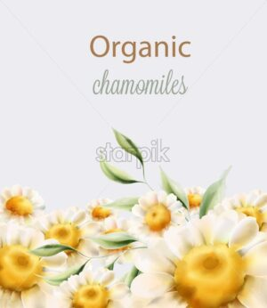 Organic chamomiles flowers with green leaves. Watercolor vector - Starpik Stock