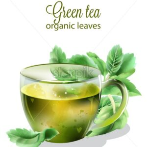 Organic green tea in transparent cup with mint leaves. Watercolor vector - Starpik Stock