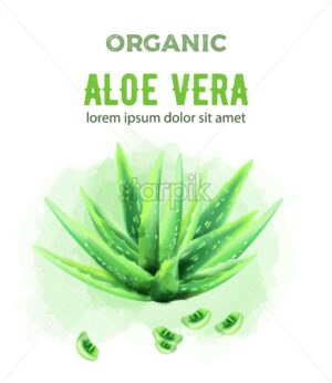 Organic green watercolor Aloe Vera plant with pieces. Vector - Starpik Stock