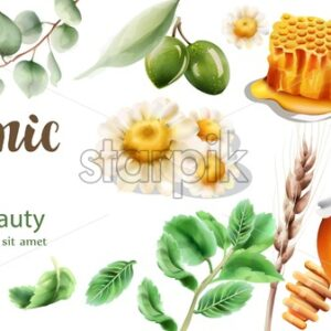 Organic products composition with chamomiles, honeycomb, olives, honey jar and leaves. Watercolor vector - Starpik Stock
