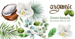 Organic products composition with green olives, palm and mint leaves, coconut and christmas orchid. Watercolor vector - Starpik Stock