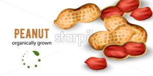 Organically grown peanuts in watercolor style. Vector - Starpik Stock