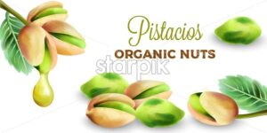 Pistachio green seeds with dripping oil. Organic nuts vector - Starpik Stock