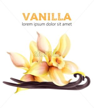Vanilla watercolor sticks and leaves. Healthy products vector - Starpik Stock