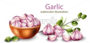 Watercolor garlic in pot with olive branch decoration. Healthy food vector - Starpik Stock