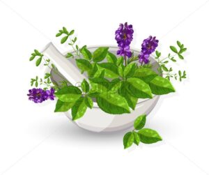 White mill bowl with eucalyptus leaves and lavender flowers. Natural herbs vector - Starpik Stock