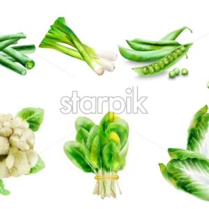 Bio Menu cover with various vegetables. Asparagus, beans, onion, spinach, cabbage, pepper, cauliflower. Watercolor vector - Starpik Stock