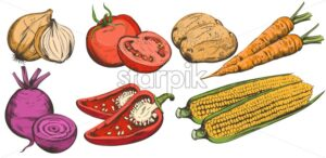 Colorful line art Fresh vegetables including rose onion, pepper, carrot, corn, tomatoes and potatoes. Vector - Starpik Stock
