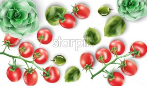 Watercolor set of red tomatoes, spinach leaves and echeveria plant. Healthy food vector set - Starpik Stock