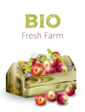 Bio fresh farm wooden box full of apples, artichokes and berries. Vector - Starpik Stock