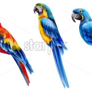 Set of watercolor parrots in different coloration. Vibrant red, yellow and blue - Starpik Stock