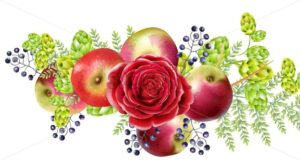 Spring set with rose flowers, blueberries, apples, artichokes and green leaves. Vector - Starpik Stock