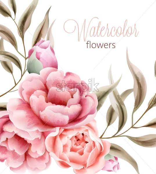 Watercolor rose peonies flowers with brown leaves on background. Vector - Starpik Stock