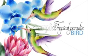 Watercolor tropical paradise birds with colorful feathers. Flying near rose and blue flowers. Vector - Starpik Stock