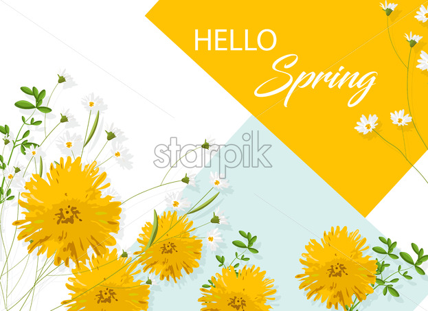 Chrysanthemum yellow flowers with white chamomile. Hello spring idea. Vector - Starpik Stock