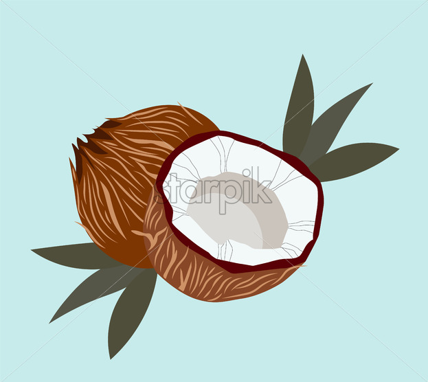 Coconut with palm leaves and blue background. Detailed close up Vector - Starpik Stock