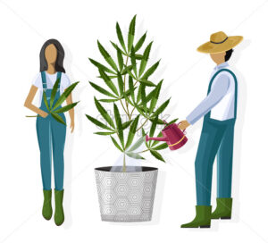 Couple of farmers growing marijuana leaves in a pot. Vector - Starpik Stock