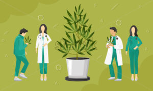 Doctors investigating cannabis leaves growing in a pot. Vector - Starpik Stock