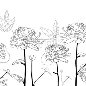 Line art black and white peonies flowers on isolated background. Vector - Starpik Stock