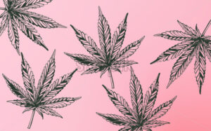 Line art marijuana cannabis leaves on purple background. Vector - Starpik Stock