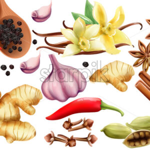 Natural spices and vegetables composition with onion, garlic, salt, red and grounded black pepper, ginger, cinnamon sticks and vanilla. Vector set - Starpik Stock