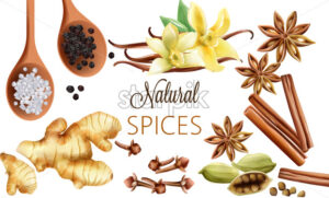 Natural spices composition with salt, black pepper, ginger, cinnamon sticks and vanilla. Vector set - Starpik Stock