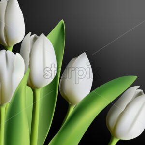 Realistic three dimensional white tulip flowers on black gradient background. Vector - Starpik Stock