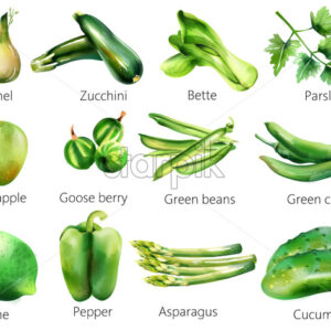 Set of green vegetables in watercolor style. Fennel, zucchini, bette, parsley, apple, goose berry, beans, chili, lime pepper asparagus cucumber Vector - Starpik Stock