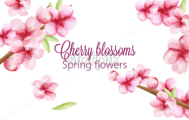 Watercolor cherry blossoms spring flowers on stem with green leaves. Vector - Starpik Stock