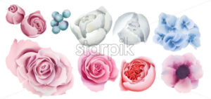 Watercolor colorful berries, roses, orchid and peony flowers. Vector - Starpik Stock