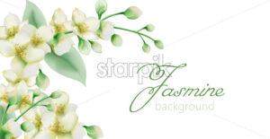 Watercolor green jasmine flowers banner with place for text. Vector - Starpik Stock